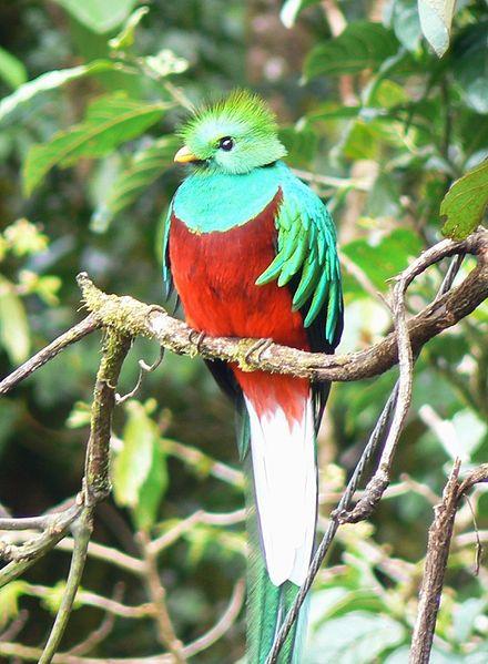 440px-Quetzal01